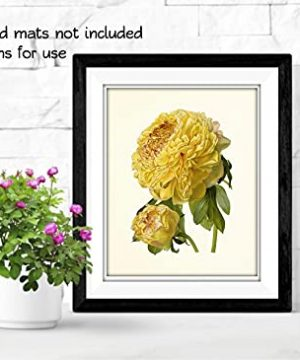 Vintage Yellow Flower Art Prints Botanical Wall Decor Set Of 6 8 X 10 Unframed 0 7 300x360